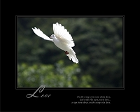 On the wings of a snow white dove, God sends His pure, sweet love...a sign from above, on the wings of a dove.