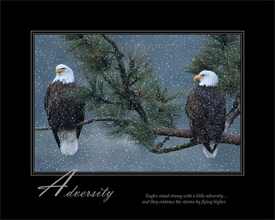 Eagles stand strong with a little adversity...and they embrace the storms by flying higher.